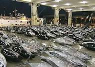 Japan sounds bluefin warning, calls for 50% catch cut