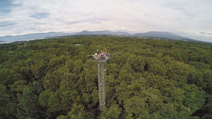 Les forêts, témoins privilégiés du changement climatique