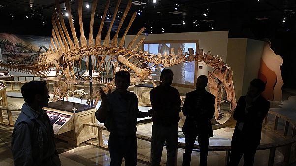 Ο Σπινόσαυρος που καταβρόχθιζε ολόκληρους καρχαρίες!