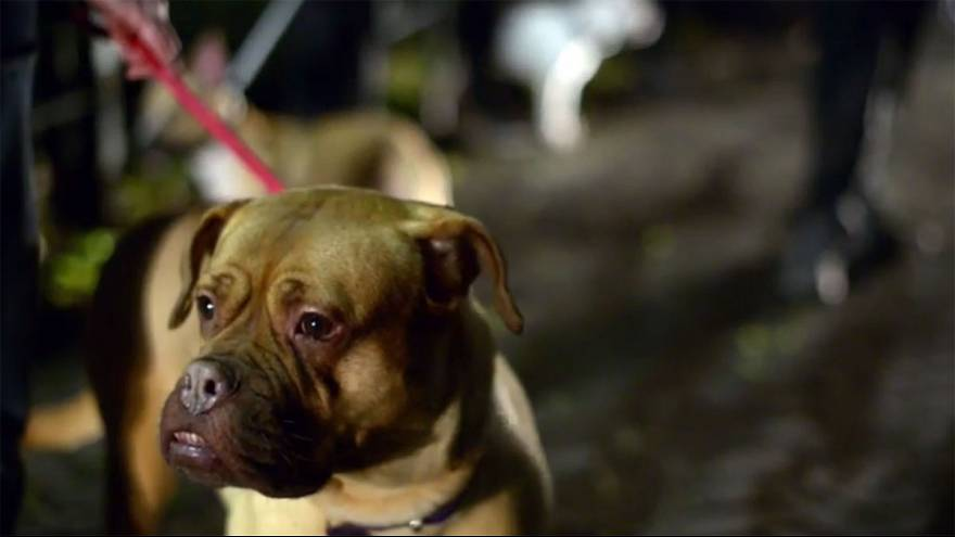 UK: 60 dogs killed after fire rips through Manchester kennels