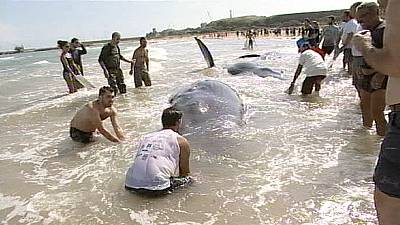 Whales beached in Italy – nocomment