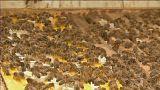 النحل يكشف عن أسرار جديدة