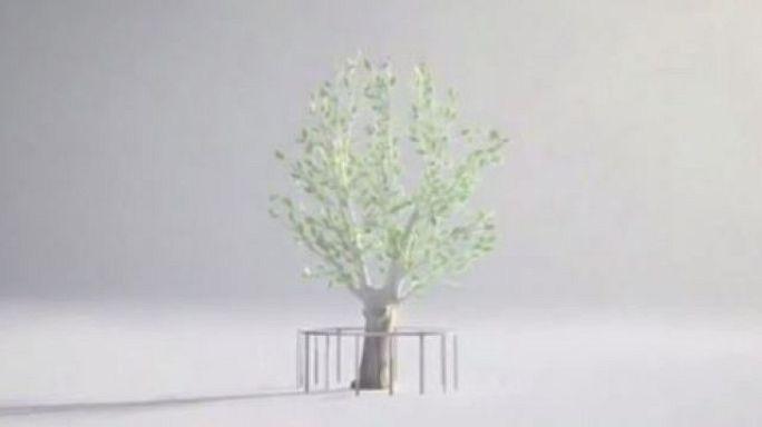 Survivor Tree (National September 11 Memorial & Museum)
