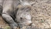 Burning protest at rhino horn trade