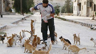 Cats of Aleppo