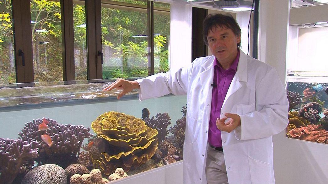 """Denis Allemand : """"la biologie marine, c'est l'Histoire de Monaco"""""""