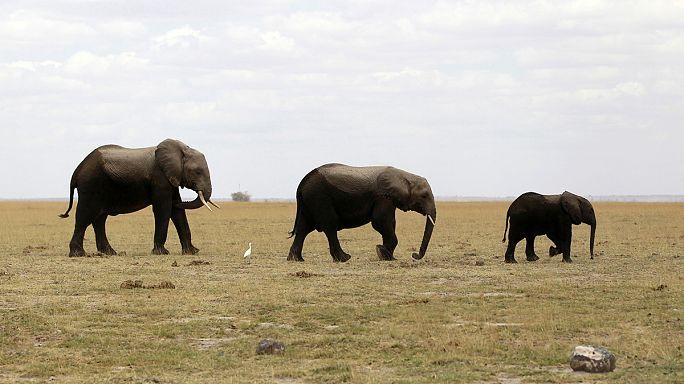 Les animaux sauvages toujours plus victimes de l'Homme