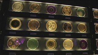 Il museo dei microbi