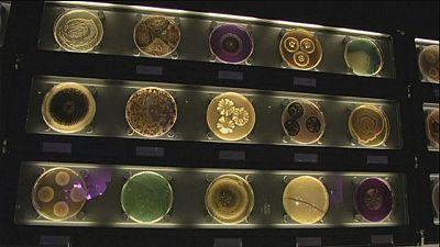 Le musée des bactéries