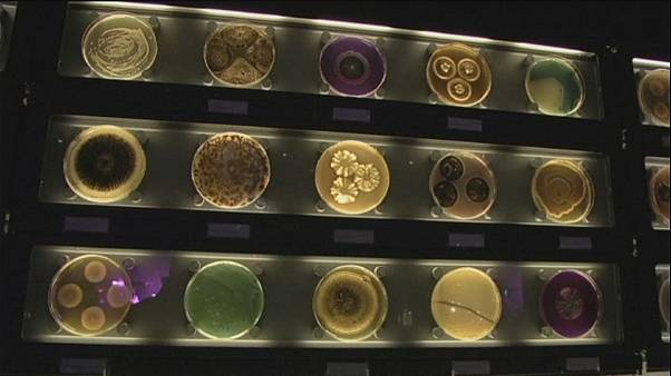 دنیای موجودات میکروسکوپی در موزه «میکروپیا» در آمستردام