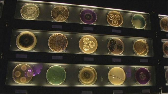 Bakterilerin görünmez dünyası: Micropia