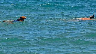 Ελλάδα: Ελεύθερη πρόσβαση για κατοικίδια ζώα σε παραλίες