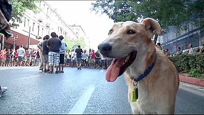 Anti-austerity 'riot dog' Sausage dies in Greece