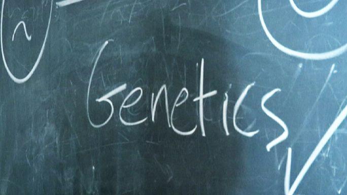 Des Danois génétiquement heureux