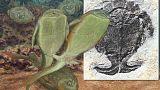 Science : surprenante découverte sur la vie sexuelle de poissons cuirassés préhistoriques