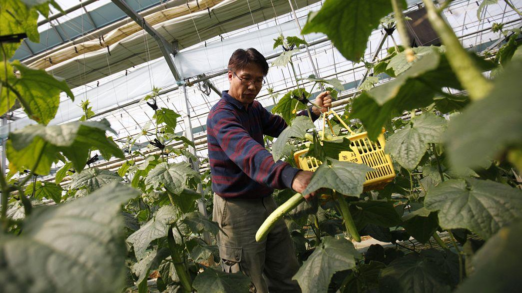 Corée du Sud : Amnesty International dénonce l'exploitation des ouvriers agricoles migrants