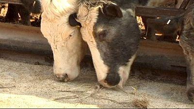 Mosca allarga il bando su prodotti Ue a farine e grassi animali