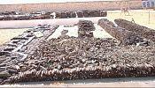 عزم جهانی برای پاکسازی میادین مین در مصر