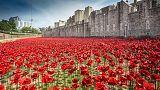 L'hommage des coquelicots pour le centenaire de la Première Guerre mondiale