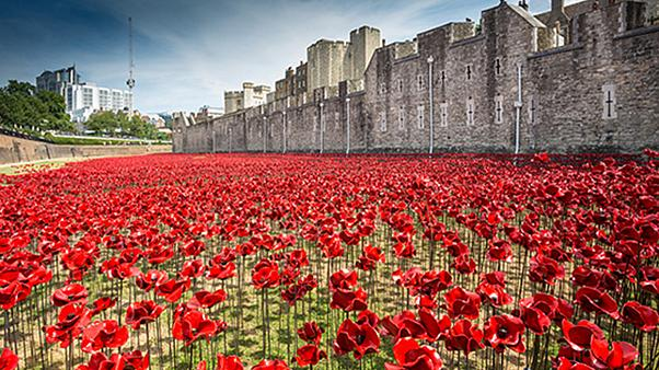 Gallery: See the stunning poppy tribute to mark WW1 centenary