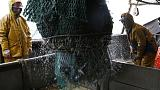 Greenpeace s'attaque aux principaux acteurs de la pêche intensive