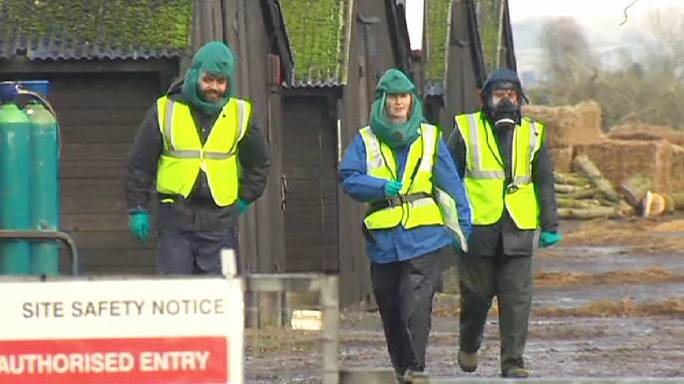 Grippe aviaire : la souche H5N8 confirmée en Angleterre
