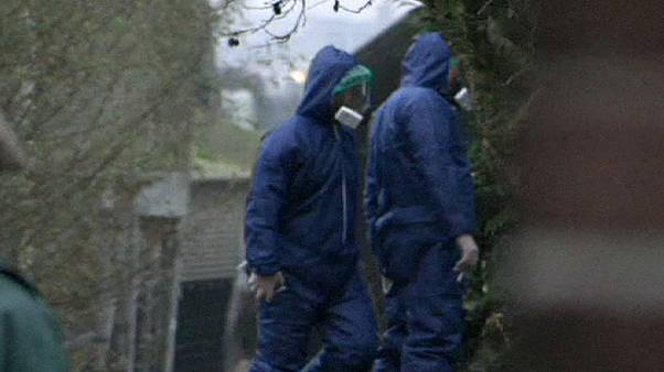 Gripe aviar en una granja de Holanda