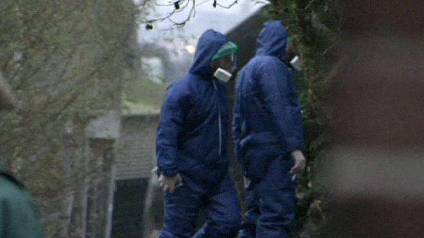Птичий грипп в Нидерландах: забиты еще 43 тысячи кур