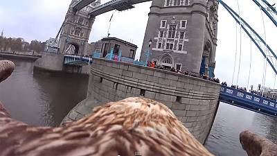 Watch: Eagle captures remarkable footage of London