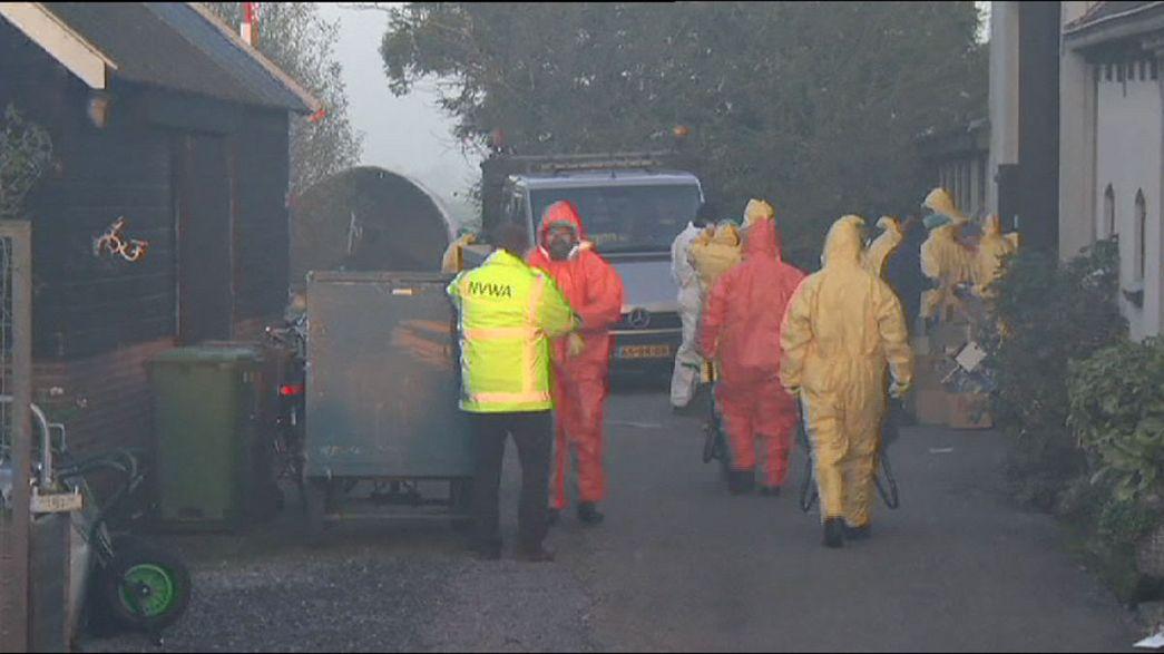 Holanda deteta terceiro foco de gripe das aves no país