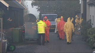In Olanda terzo caso di influenza aviaria