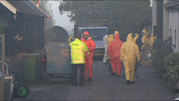 اكتشاف حالة ثالثة من انفلونزا الطيور في هولندا