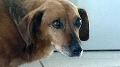 Heartbroken dog waits in vain for its dead owner in Russia