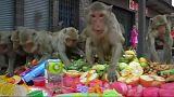 Thaiföld: makákók lakomája a Lopburi Majomfesztiválon