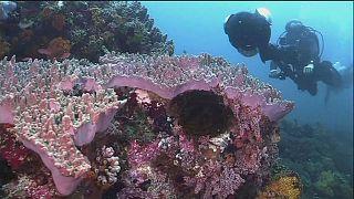 Les récifs coralliens photographiés sous tous les angles