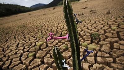 Cactus installation highlights Sao Paulo's drought crisis