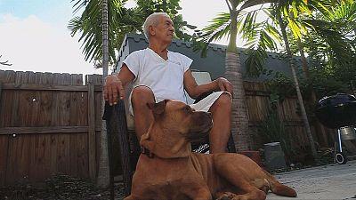 """Der """"Anti-Aging-Dog"""": Längeres Leben für Hunde"""