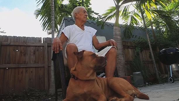 Tests on dogs in hope of prolonging human lifespan