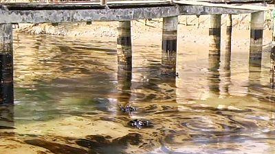 Bangladesh: marée noire dans la région protégée des Sunbardans