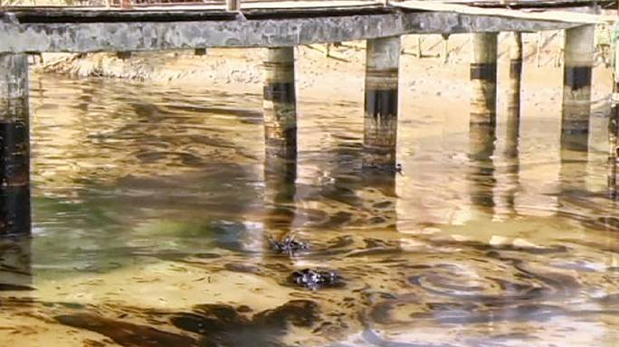 كارثة بيئية في مياه نهر شيلا ببنغلاديش