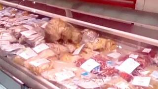 """Un gato se """"come"""" 800 euros en el aeropuerto de Vladivostok"""