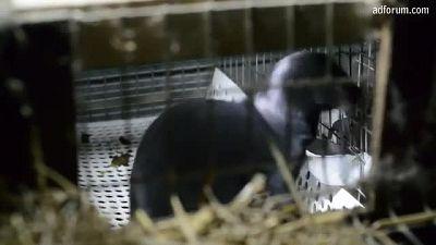 Fur trap (SPCA)
