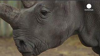 Euronews' 2014 animal highlights