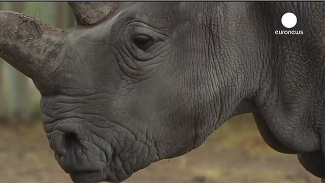 Euronews' 2014 animal highlights