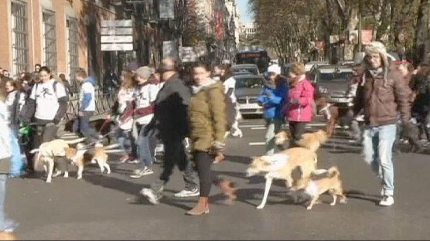 Sanperrestre ou comment Madrid devient le paradis des chiens!