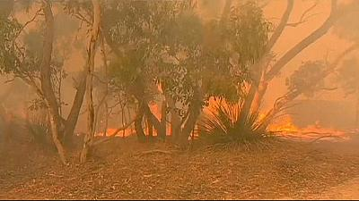 Austrália: incêndios fora de controlo devastam 11 mil hectares de terreno