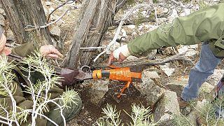 Etats-Unis : un fusil posé contre un arbre… depuis 132 ans!