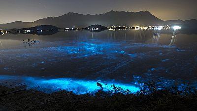Algenplage lässt Meer bei Hongkong giftig leuchten
