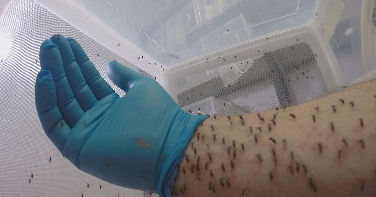 un nouveau pi ge anti moustiques pour lutter contre le paludisme euronews futuris. Black Bedroom Furniture Sets. Home Design Ideas