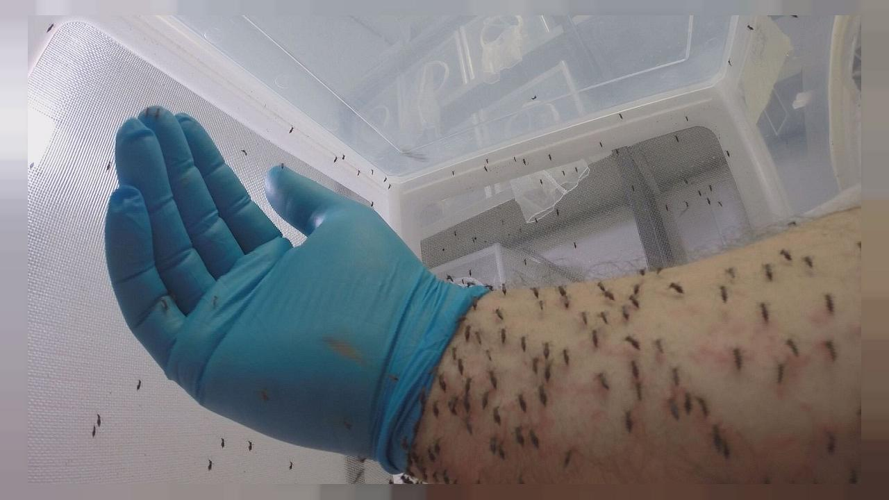 Sucker punch: the European research project dealing a blow to mosquitoes